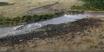 塞伦盖蒂国家公园是坦桑尼亚最著名的国家公园,植被以开阔草原型植物为主,一个有着300多万只大型哺乳动物的巨大生态系统,这些动物群在季节性的水源地和草场之间来往迁徙。