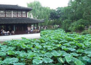 江苏园林——拙政园