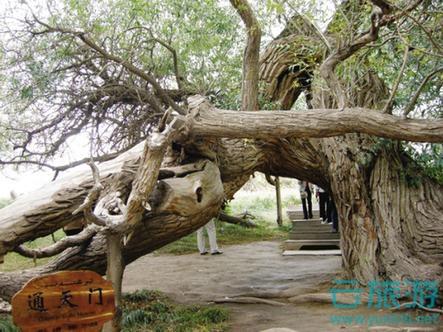 天山神木园 大西北 新疆旅游景点